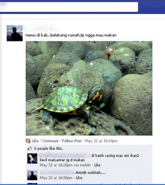 invasive species_indonesia_red eared slider