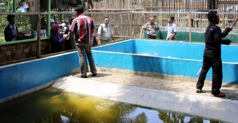 the students accompanied by our staff watching the hatchlings in ponds