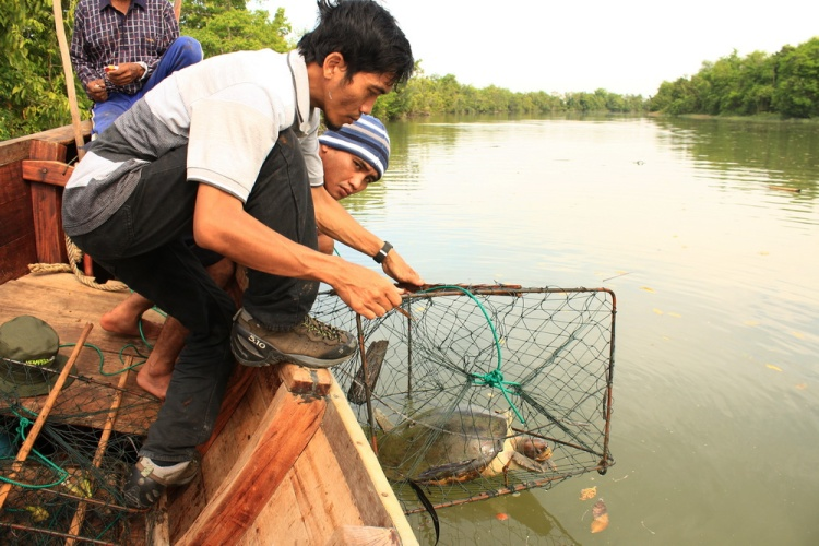 trap successful to capture Painted terrapin