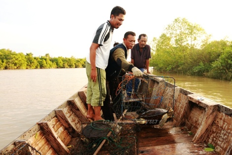 The trap successfully capture Painted terrapin (Batagur borneoensis). (Photo: joko guntoro)