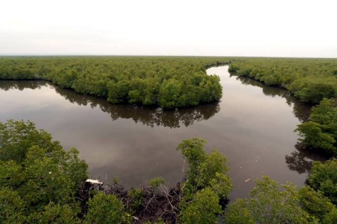 mangrove forest aceh