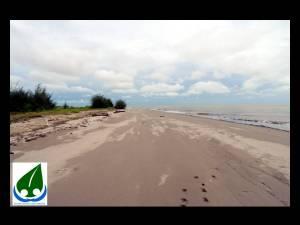 nesting beach 4