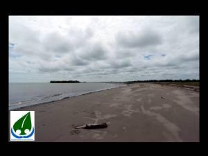 nesting beach 7